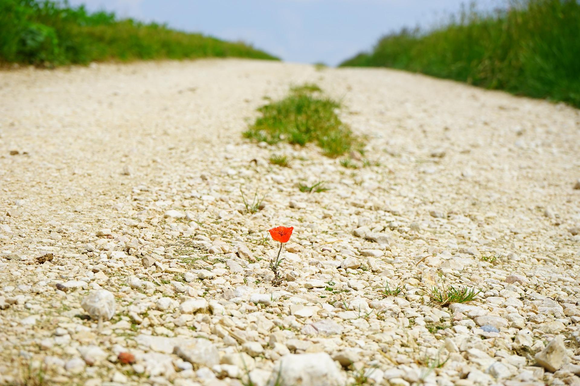 道に咲いている花